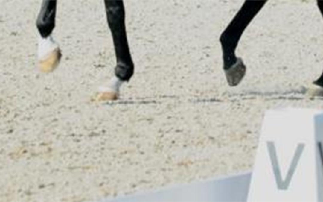 In 2020 6750 deelnemers aan online paardrijden