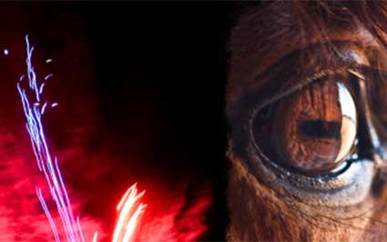 Vuurwerk op Texel: paard been gebroken