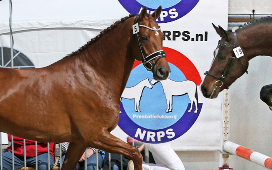 NRPS zoekt voorzitter en bestuurslid