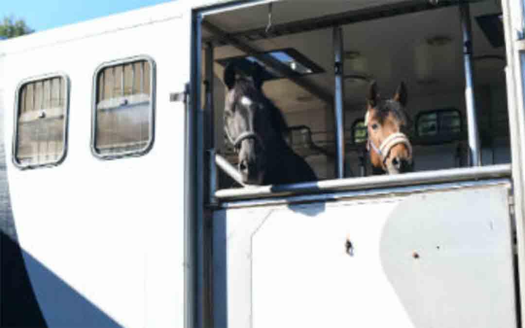 BV van BSS Paardentransport failliet