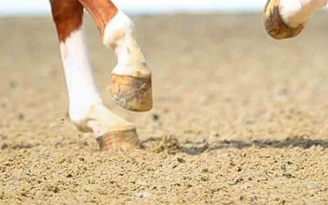 KWPN Zuid-Holland: workshop paarden beoordelen