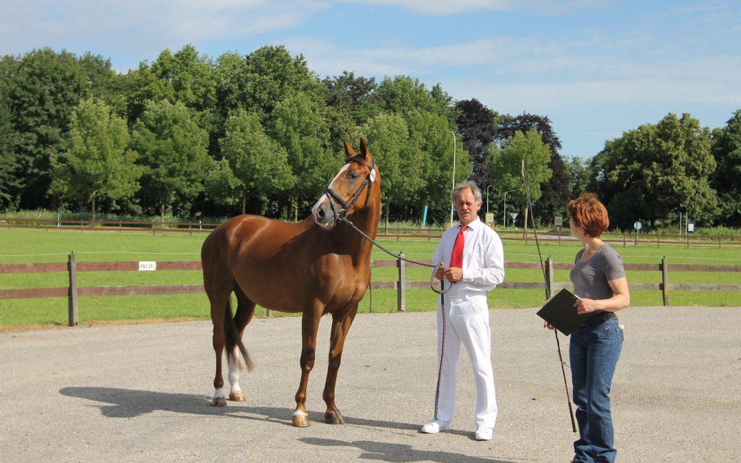 KWPN Gelderland wil veulenkeuring op 1 augustus