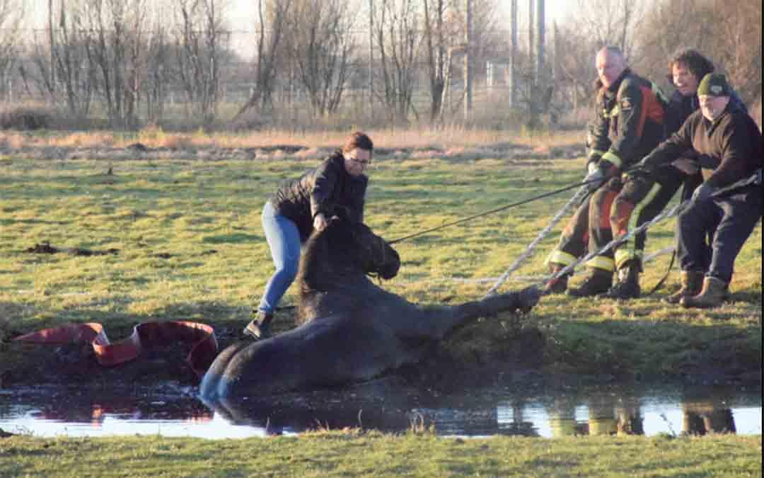 Paard gered uit sloot