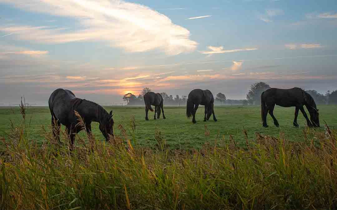 Stichting Paardenopvang Achterhoek dreigt dakloos te worden