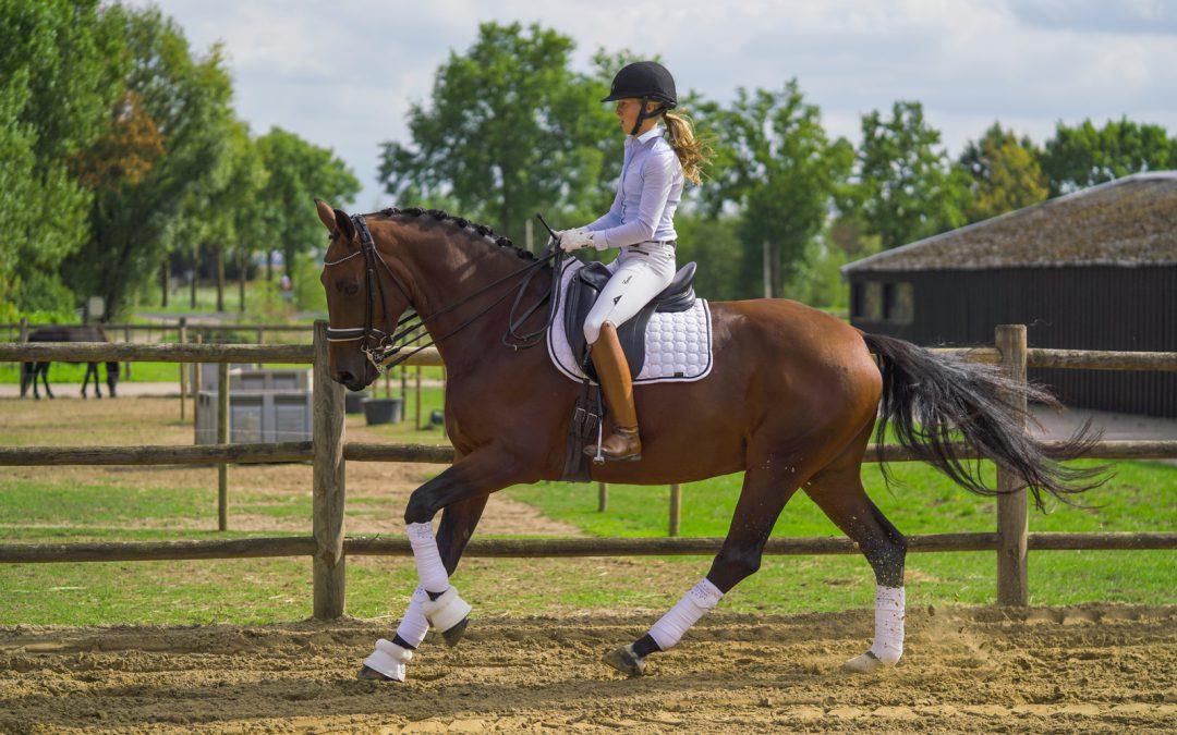 Aanvraag voor impuls van 1,7 miljoen euro in Limburgse paardensector
