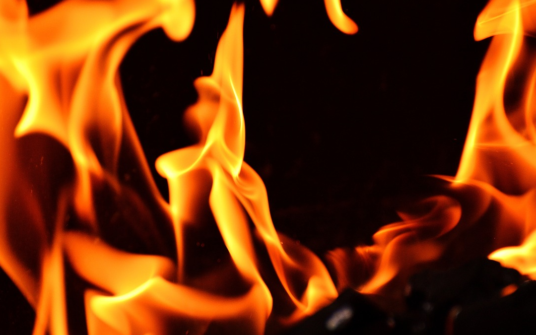 Twee paarden overleden in brand Halfweg