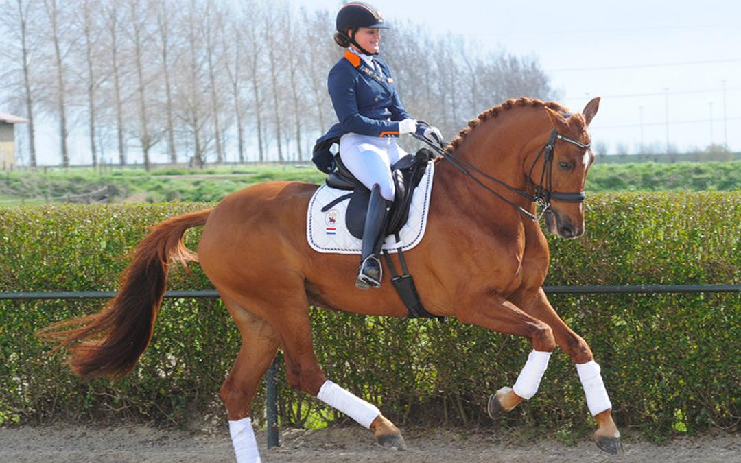 Rothenberger pakt draad in Zeeland weer op na dood vijf paarden
