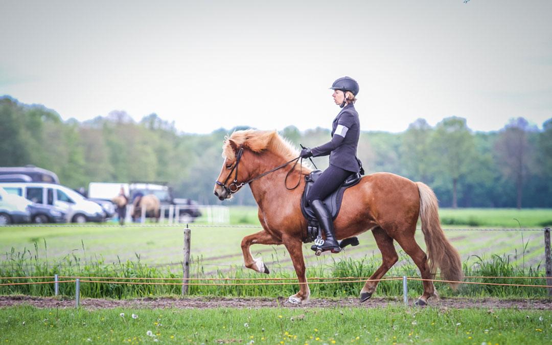 Noordelijke ruiters IJslandse paarden presteren in Spier