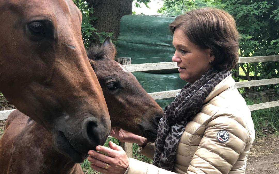 Jumping Twente wint live uitzending Nieuws.horse