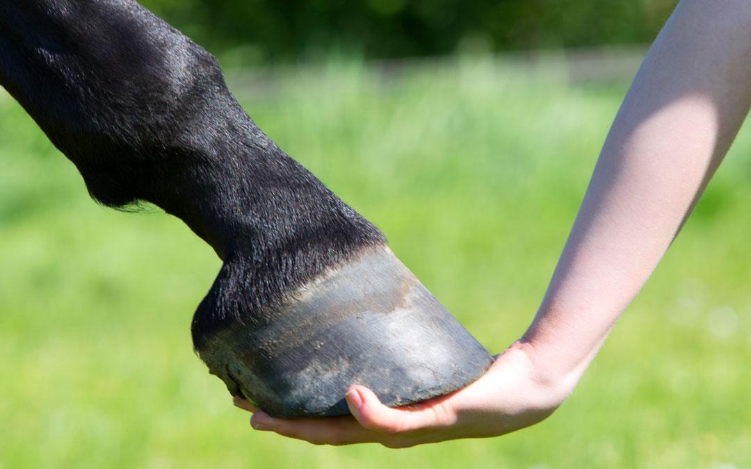 KWPN Zeeland roept fokkers en ruiters op