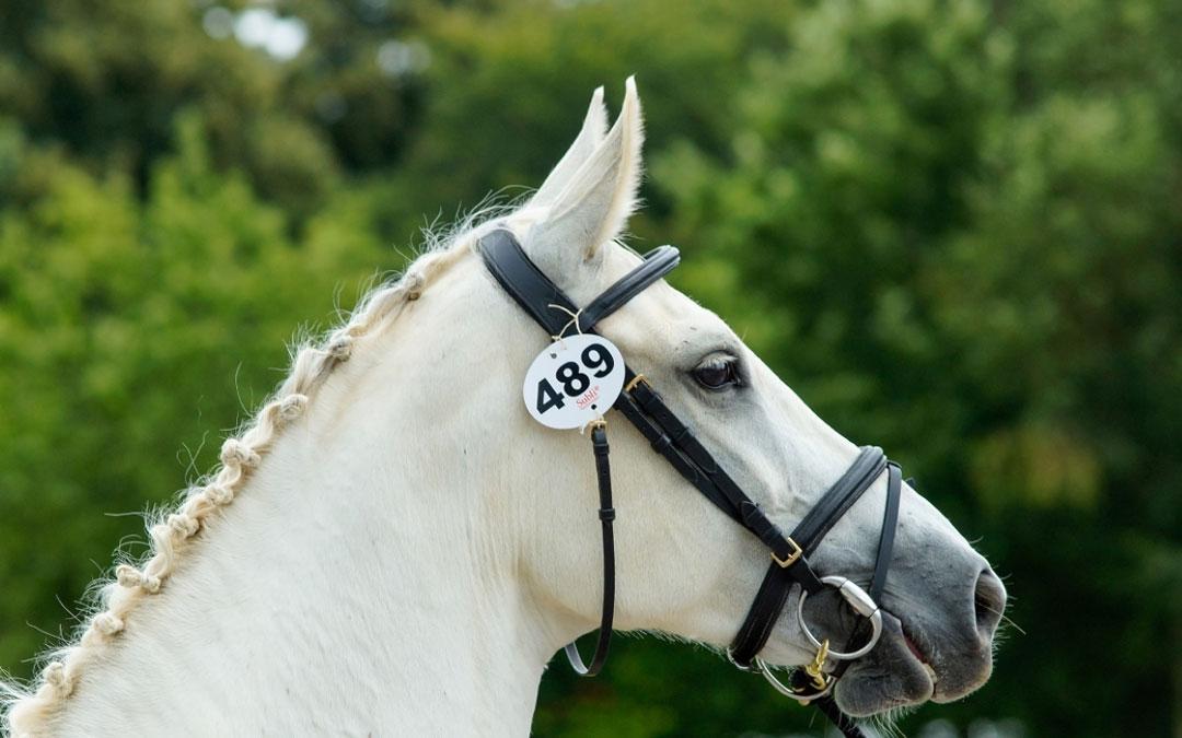 Drie ster(waardige) paarden op KWPN thuiskeuring Gelderland