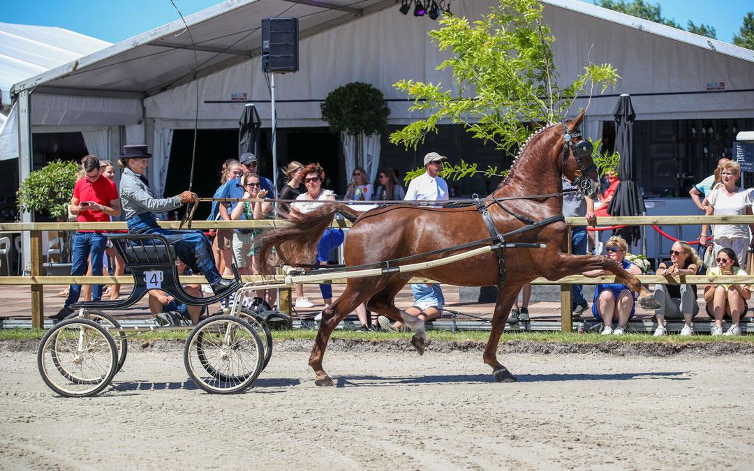 Anemone Horsetrucks Grote Prijs Young Riders Tuigpaarden