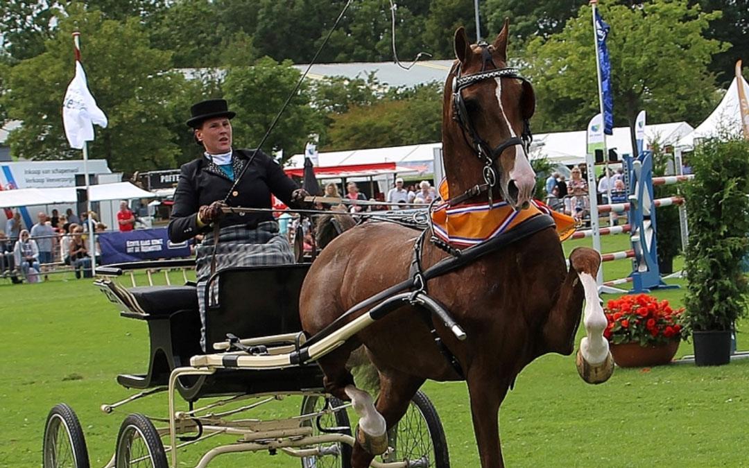 Fantijn, Jara en Just Lucky schitterende kampioenen in Opmeer