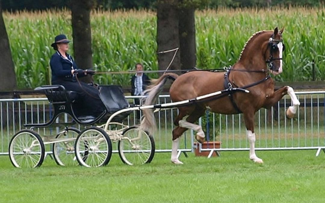 Hanneke van Wessel ook ereklasse kampioen met Briljant