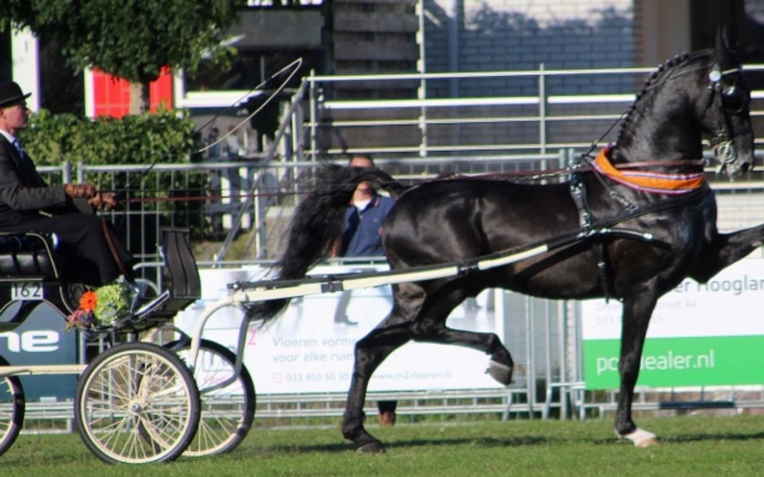Dylano Nederlands kampioen dekhengsten