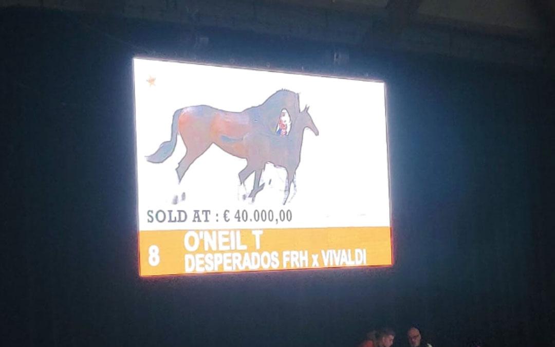 40.000 voor duurste dressuurveulen in Ermelo