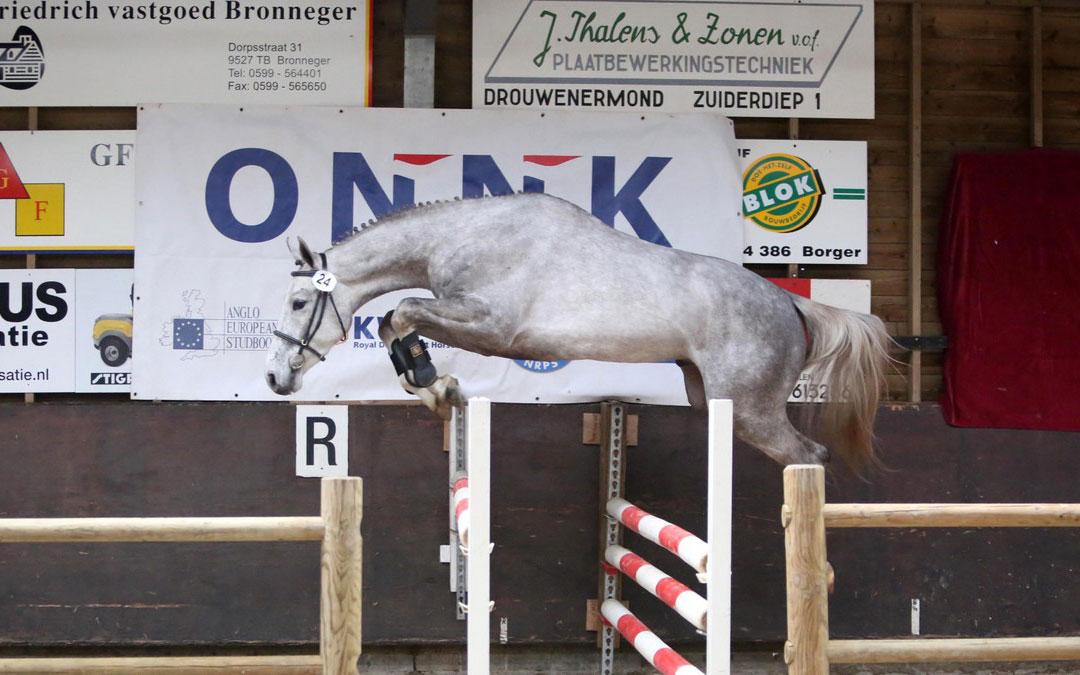 ONNK voor jonge paarden breidt uit naar Flevoland