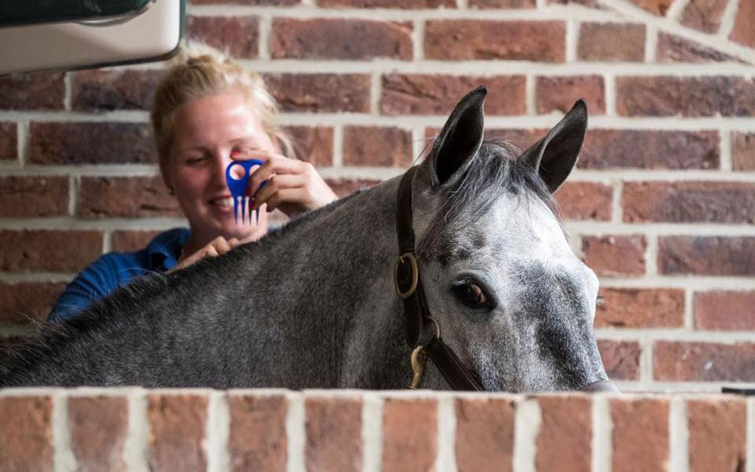 FNV: Hoog tijd voor cao in de paardensport