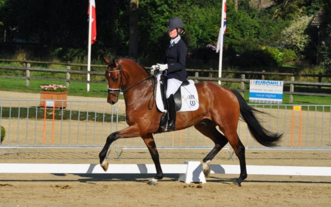 Zware Tour-paard Dion Johnson DVB overleden