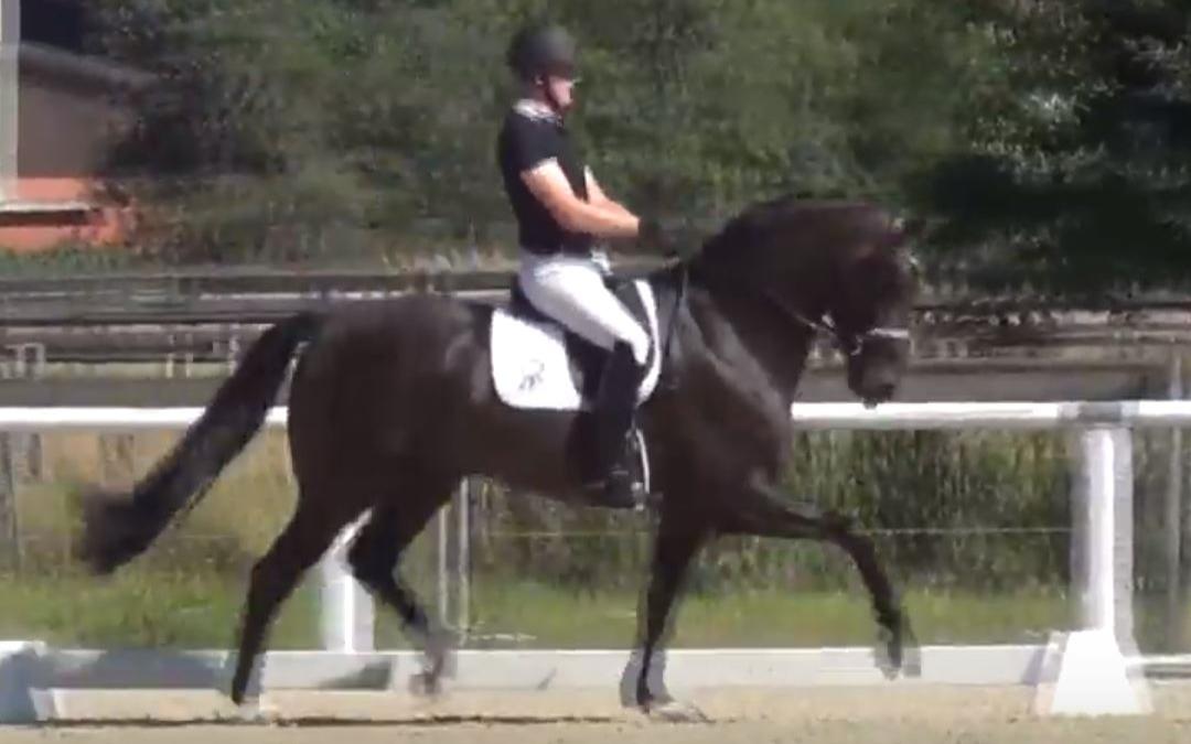Gouden WK-paard Zucchero overleden