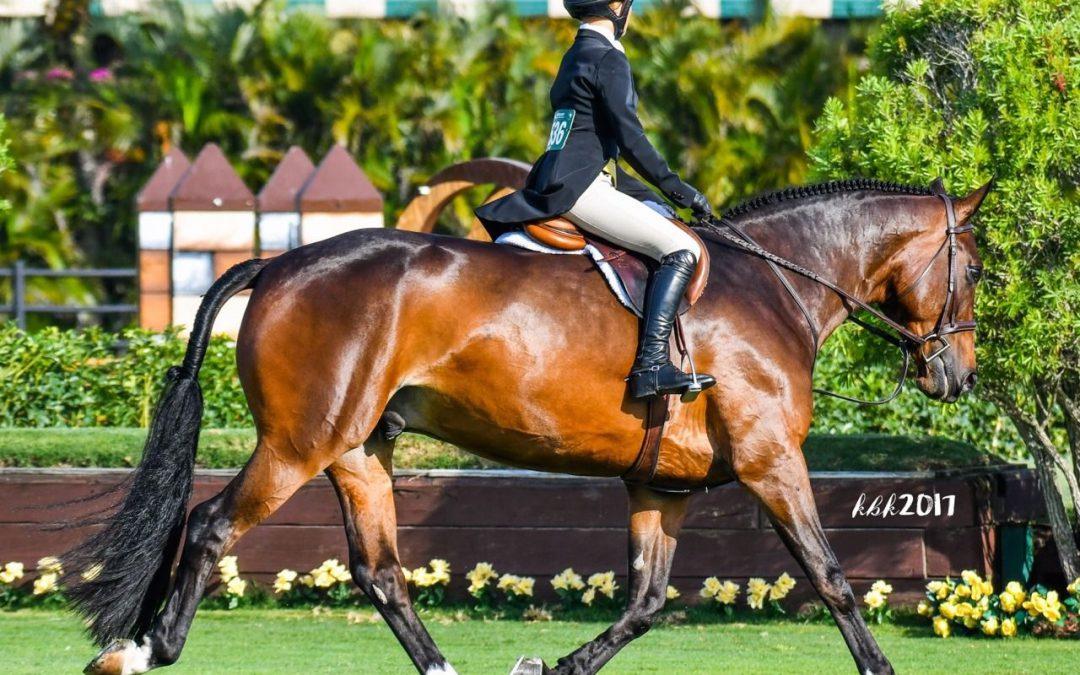 Groot-Brittannië begint ook met annuleren paarden evenementen
