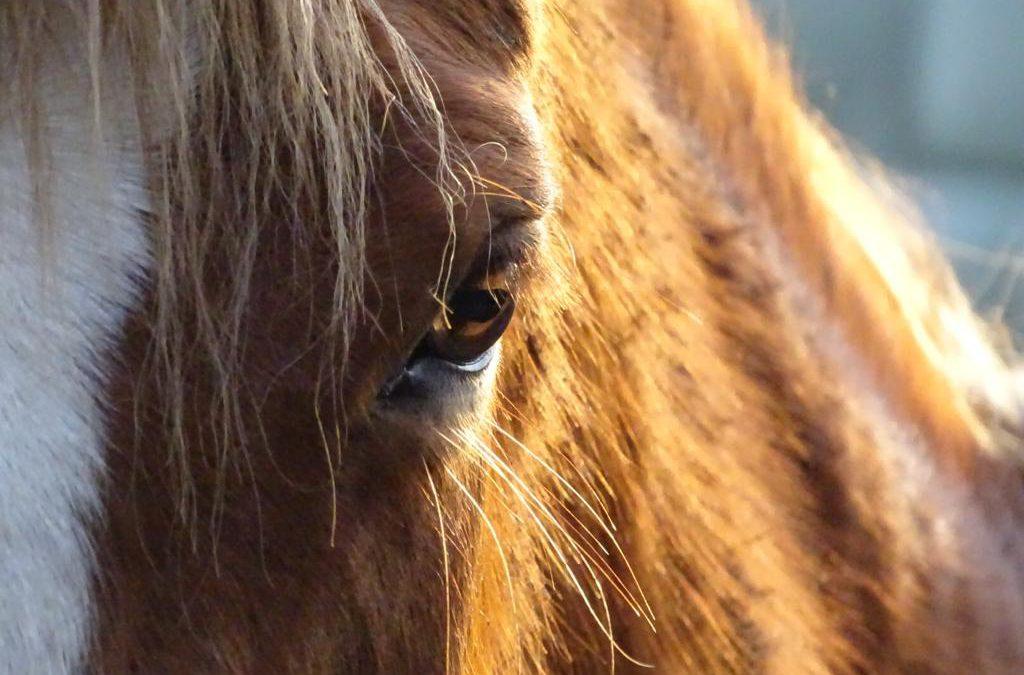Update maatregelen paardensport