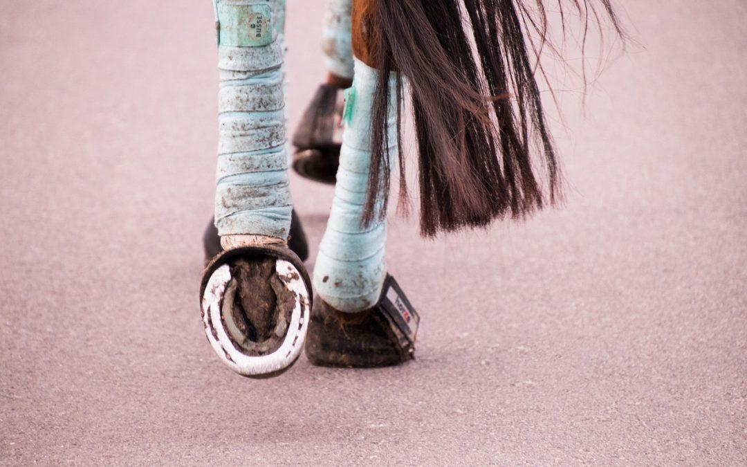 Geldende maatregelen paardensport verlengd tot en met 28 april