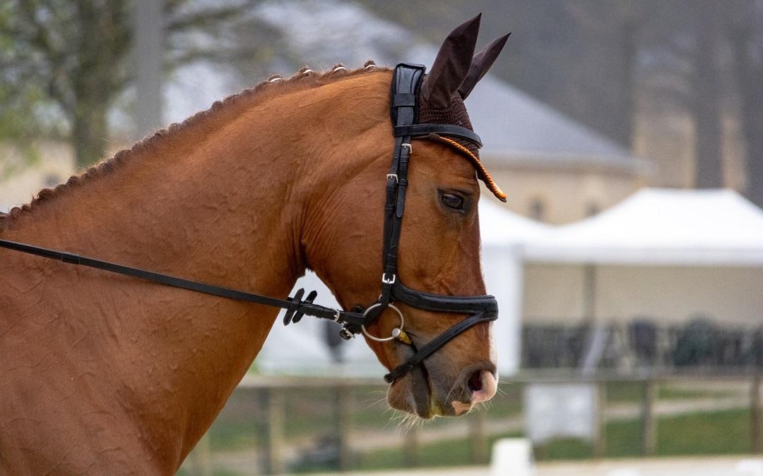 Ook EK pony's uitgesteld