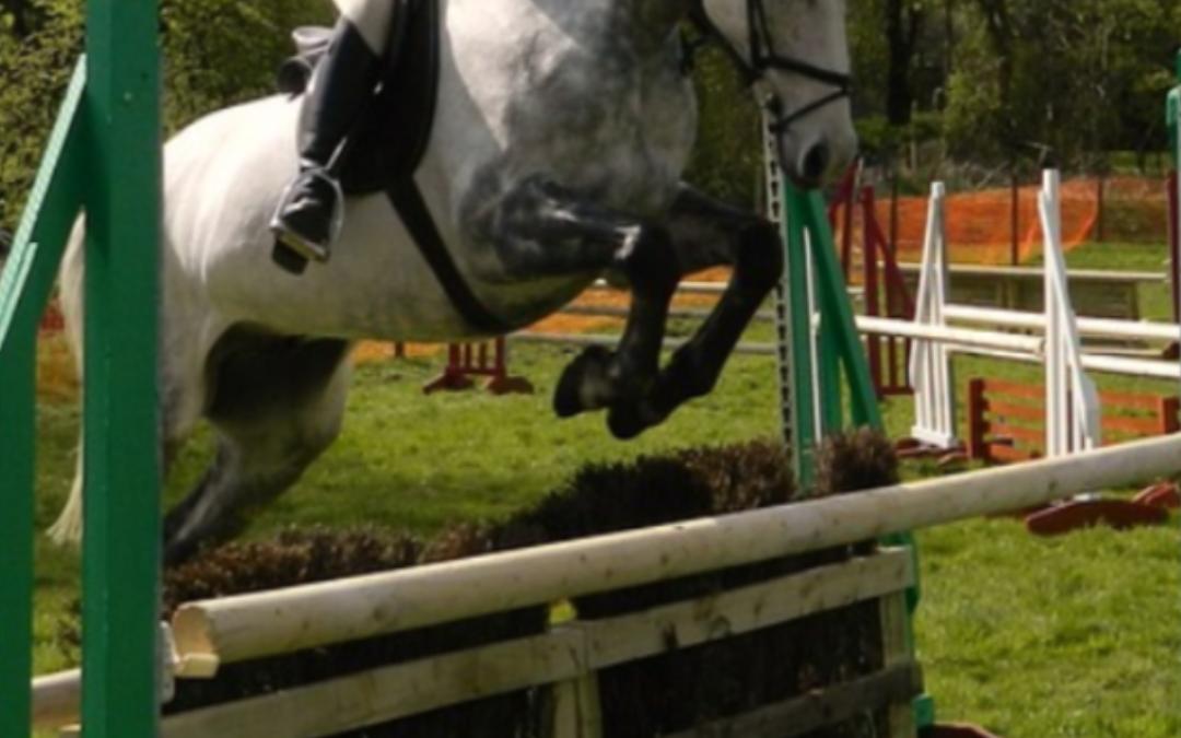 """Duitsland onderzoekt wat ruiters en trainers kunnen doen als een paard """"onvoorzichtig springt"""""""