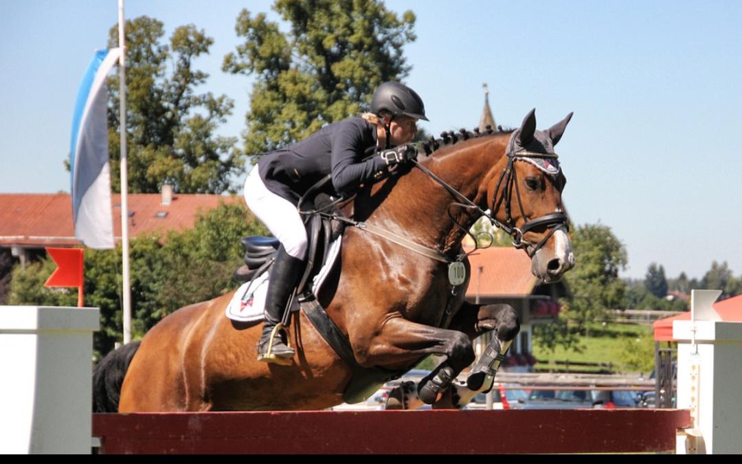 Programma springen jonge paarden België aangepast