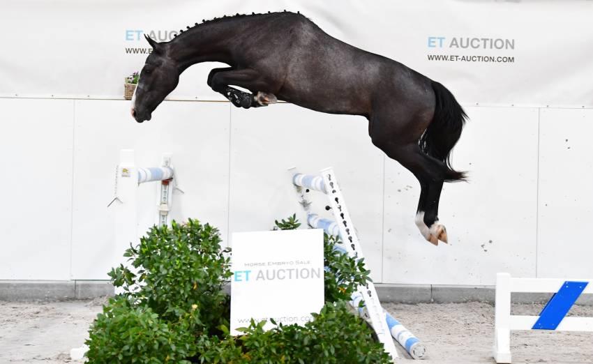 ET Auction vanaf 5 juni met veulens en jonge paarden