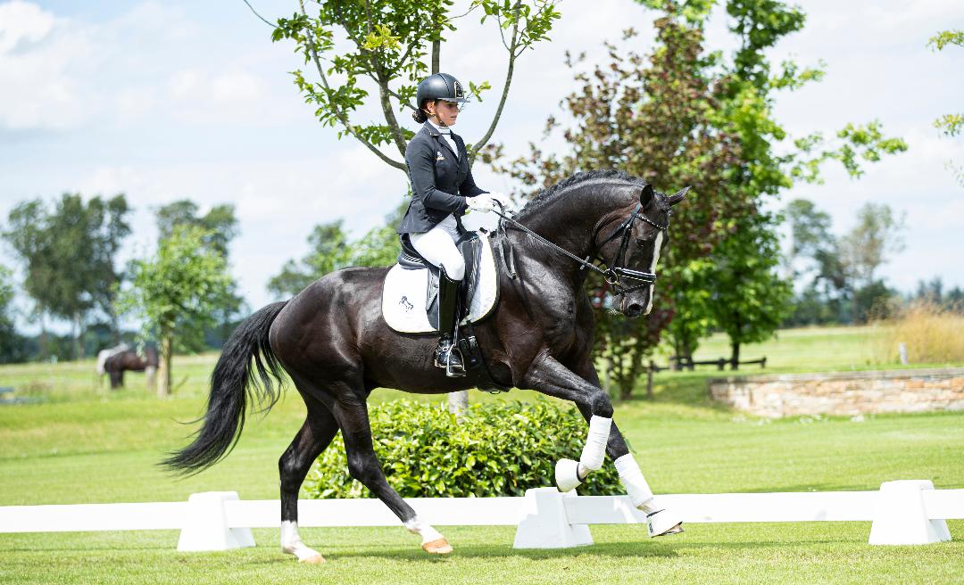 Exclusieve sportpaarden en fokmerries in eerste deel collectie Black Horses Auction online