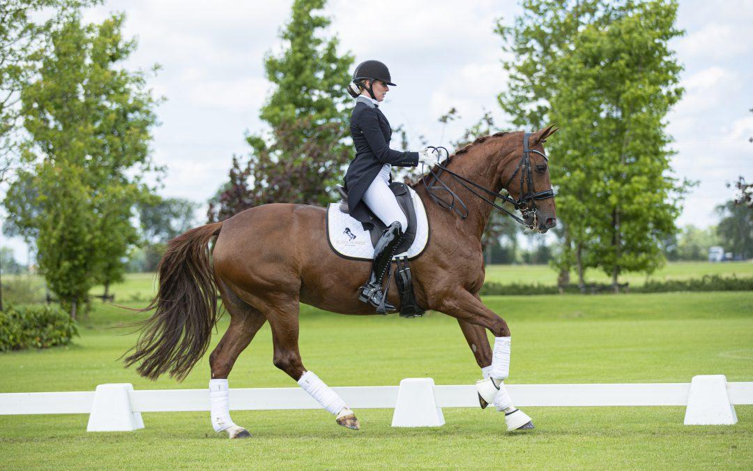 Black Horses Auction: 40 paarden verkocht naar 11 landen
