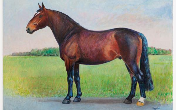 Aangepaste hengstenkeuring Vereniging het Groninger Paard