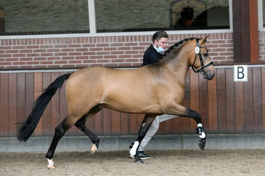 NRPS accepteert nog twee ponyhengsten op nakeuring