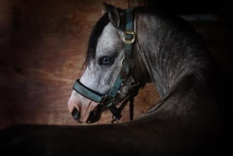 Aandacht voor paardencoaching op TV