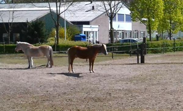 't Hoefijzer behaalt keurmerk Paard en Welzijn