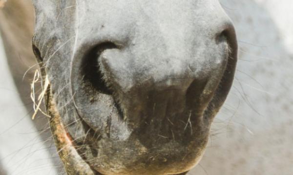 Steeds meer paarden verlaten CES Valencia