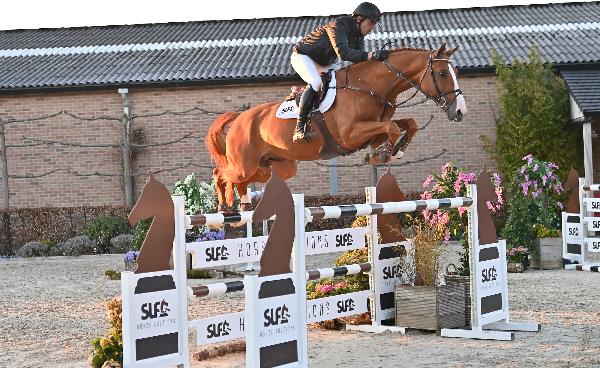 Tweede editie SLF Horse Auctions pakt uit met imponerende collectie!