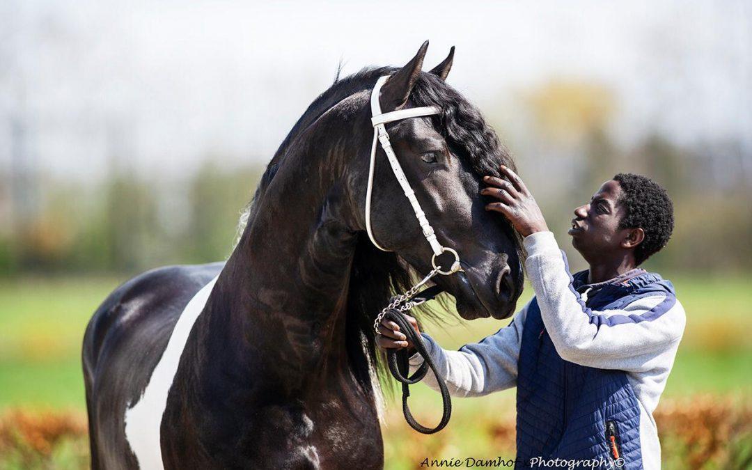 Eerste veiling paarden-veiling.nl aanstaande