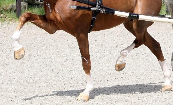 Westfort sponsort hengstencompetitie tuigpaarden