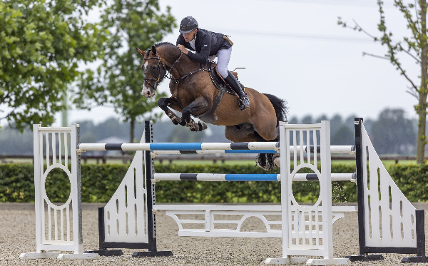 Black Horses Auction: Bied nu op de springpaardencollectie!