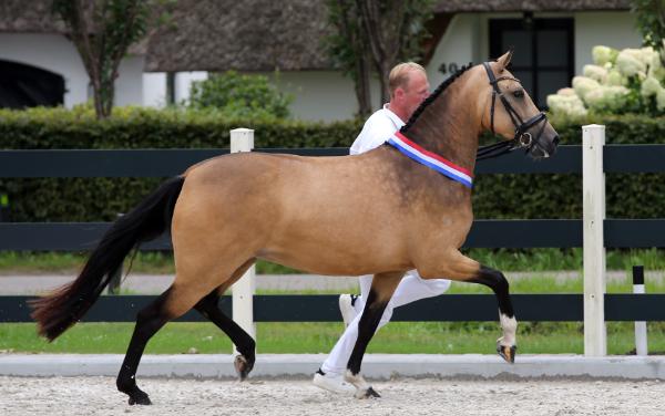 Sterke Nationale ponykampioenen bij het NRPS