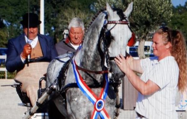 Magnifiek wint Westfort Hengstencompetitie